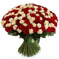 Букет 101 красно-кремовая роза